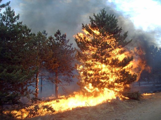 Razglas o veliki požarni ogroženosti naravnega okolja po vsej državi - preklicano 12. 3. 2019