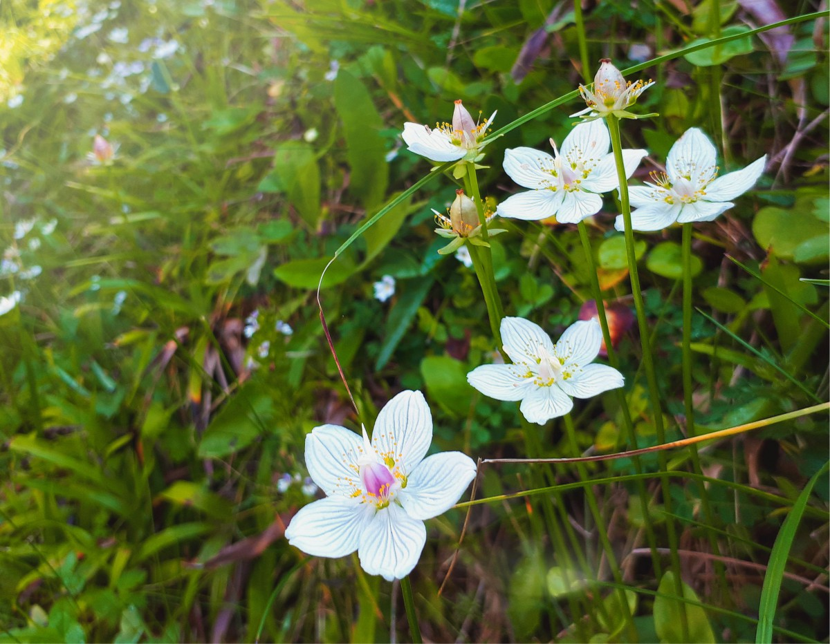 Cvetje v jeseni. Foto: Saša Prosen